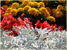 Фотографии цветов. Цветы на клумбе
