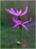 Фото цветов высокого разрешения. Купить фото