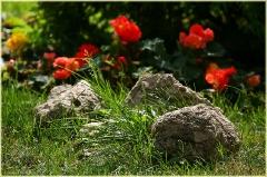 Ландшафтный дизайн. Цветок и Камень