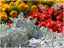 Фотографии цветов. Серый цвет