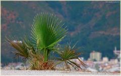 Пальма, выросшая на самом краю глубокой пропасти