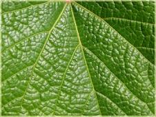 Фотографии цветов. Зеленый лист