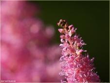 Цветы на клумбе. Фото с размытым фоном
