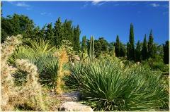 Фотографии кактусов и тропический растений. Кактусовая оранжерея. Крым