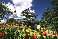 Фото цветов на клумбе на фоне синего неба
