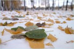 разноцветные листья на переднем плане