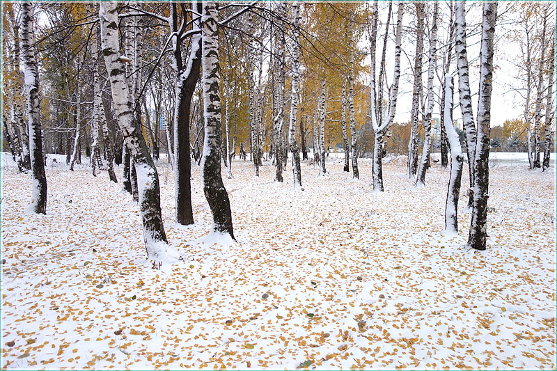 желтые листья на снегу. ковер из осенних листьев