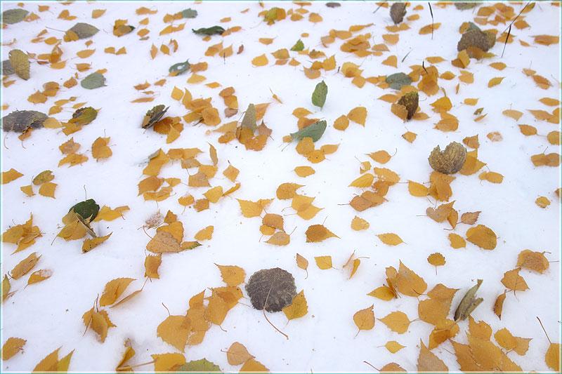 осенние желтые листья на снегу. фон для презентаций