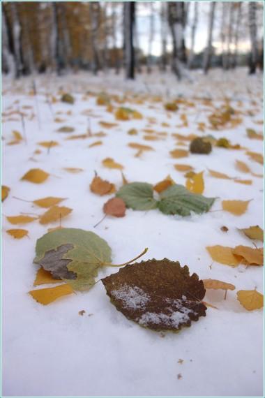 разноцветные листья на переднем плане. вертикальные снимки