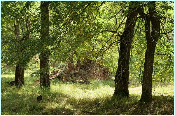 как фотографировать в лесу - формат HDR