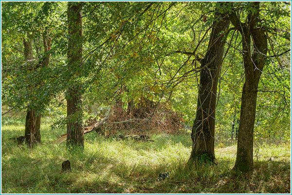 как фотографировать в лесу - формат RAW
