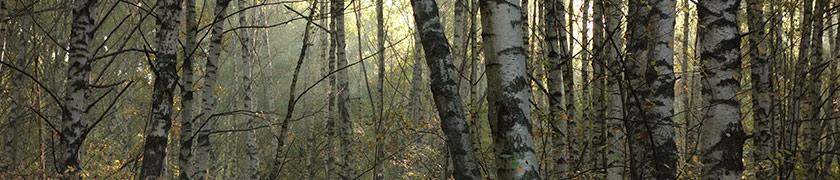 фотографии осеннего леса. утро