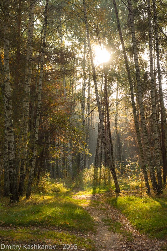 утренний пейзаж в осеннем лесу