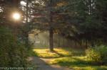 лучи солнца в тумане