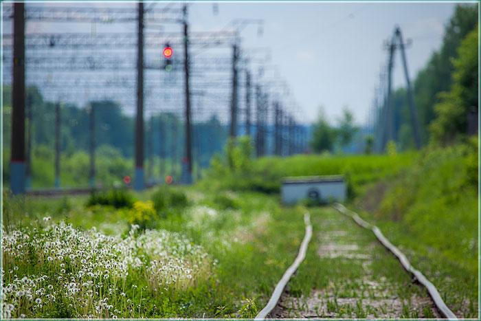 фотография белых одуванчиков у железной дороги