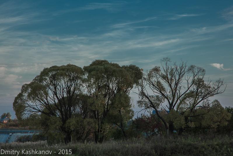вечерний пейзаж. Деревья на фоне неба
