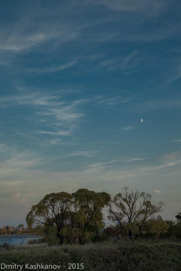 деревья и луна