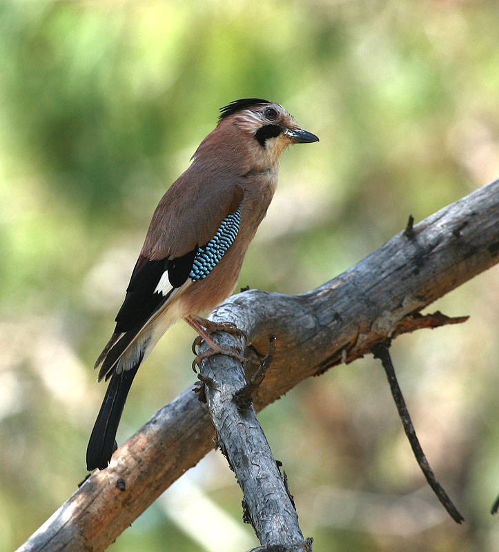 фотографии красивой птицы