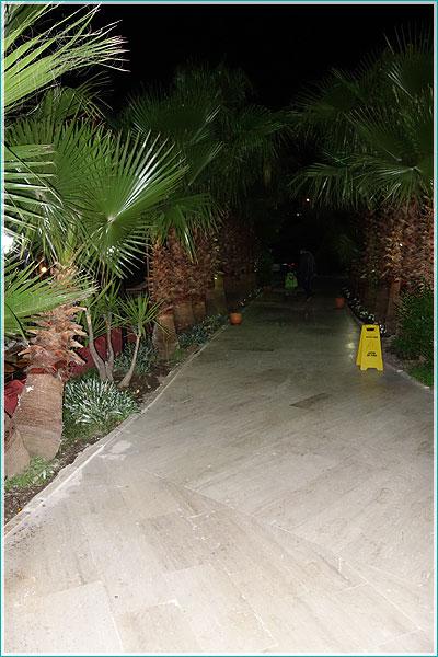 фотография со вспышкой - тени пальмовых листьев на тротуаре уже нет, передние листья подсвечены
