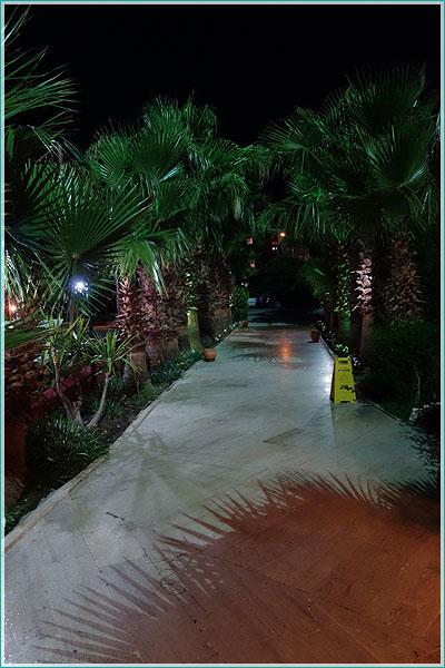 фотография без вспышки - тени пальмовых листьев на тротуаре