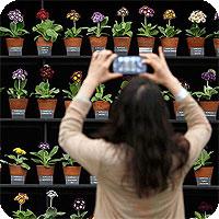 Как фотографировать цветы. Красивые фото цветов своими руками