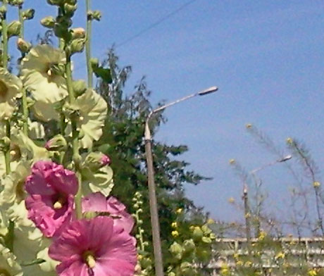 качество фотографии цветов, сделанной планшетом