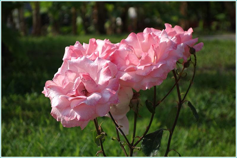 Фото цветов, сделанное в обычном режиме