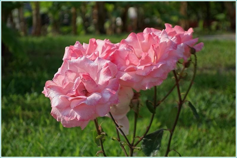 Фото цветов, сделанное в режиме HDR