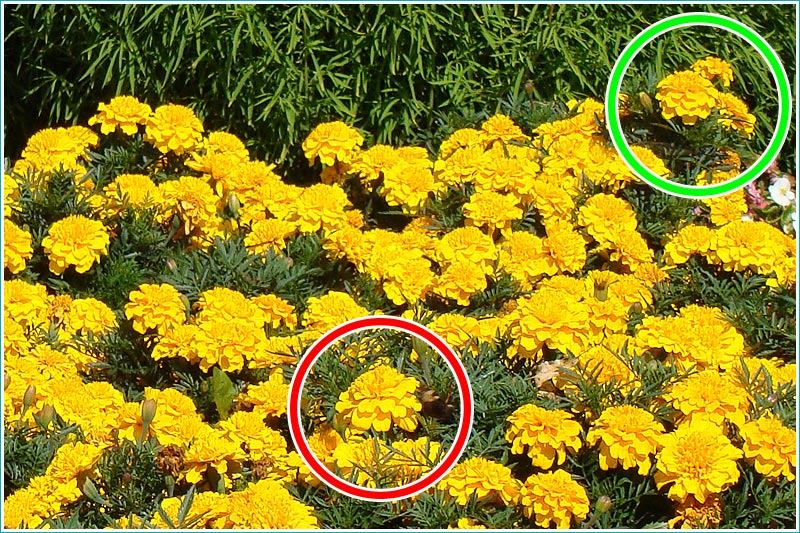 фотографии желтых цветов на клумбе