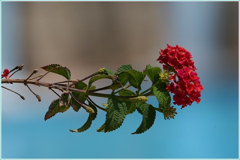 ветка цветущего кустарника на фоне воды