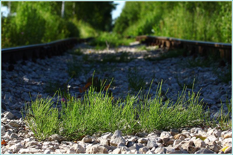 фото травы - общий вид