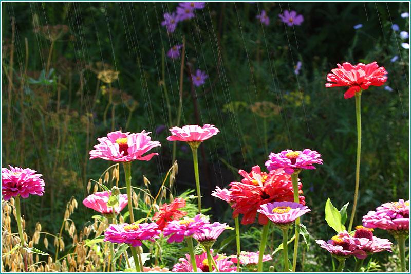 фото цветов на клумбе под дождем. длинная выдержка