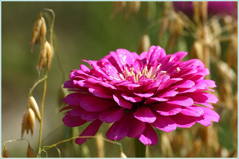 цветок с каплями воды