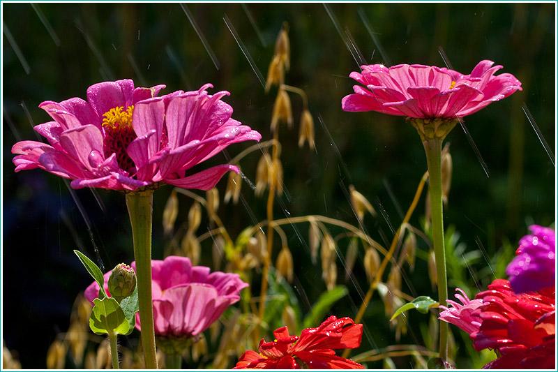 фотография цветов под грибным дождем. крупный план